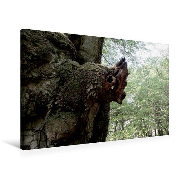 Premium Textil-Leinwand 75 cm x 50 cm quer, Baum-Hörnchen | Wandbild, Bild auf Keilrahmen, Fertigbild auf echter Leinwand, Leinwanddruck - Coverbild