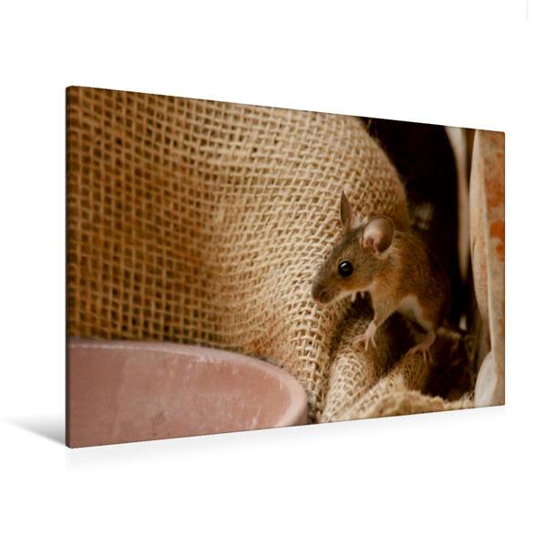 Premium Textil-Leinwand 120 cm x 80 cm quer, Putzige Mausansicht | Wandbild, Bild auf Keilrahmen, Fertigbild auf echter Leinwand, Leinwanddruck - Coverbild