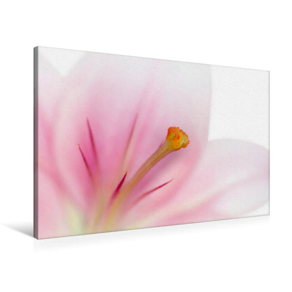 Premium Textil-Leinwand 90 cm x 60 cm quer, Wunderschöne Lilie | Wandbild, Bild auf Keilrahmen, Fertigbild auf echter Leinwand, Leinwanddruck - Coverbild