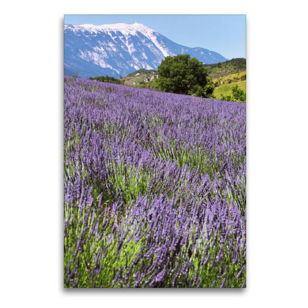 Premium Textil-Leinwand 60 cm x 90 cm hoch, Lavdendel am Mont Ventoux | Wandbild, Bild auf Keilrahmen, Fertigbild auf echter Leinwand, Leinwanddruck - Coverbild