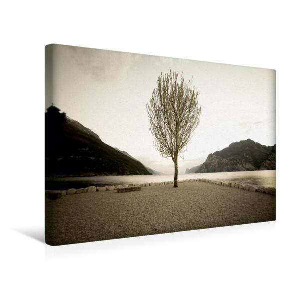 Premium Textil-Leinwand 45 cm x 30 cm quer, Einsamer Baum | Wandbild, Bild auf Keilrahmen, Fertigbild auf echter Leinwand, Leinwanddruck - Coverbild