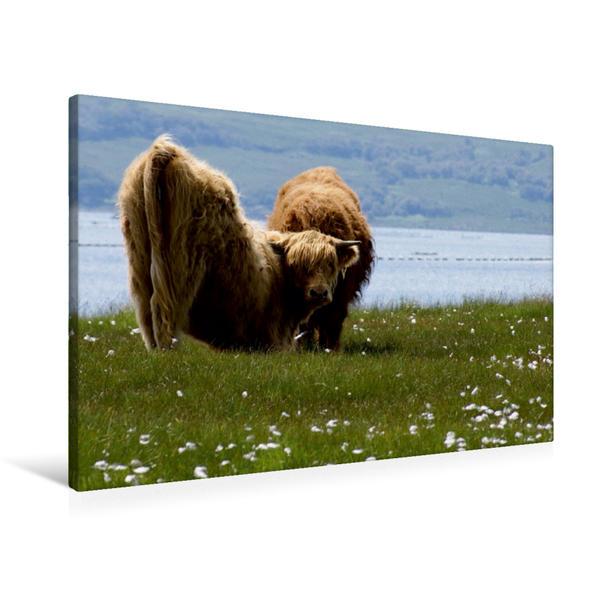 Premium Textil-Leinwand 90 cm x 60 cm quer, Highland-Yoga | Wandbild, Bild auf Keilrahmen, Fertigbild auf echter Leinwand, Leinwanddruck - Coverbild