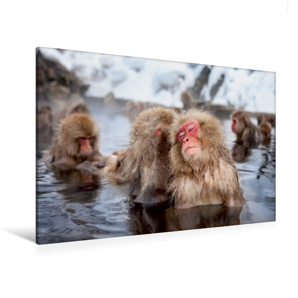 Premium Textil-Leinwand 120 cm x 80 cm quer, Japanische Schneeaffen beim Baden   Wandbild, Bild auf Keilrahmen, Fertigbild auf echter Leinwand, Leinwanddruck - Coverbild