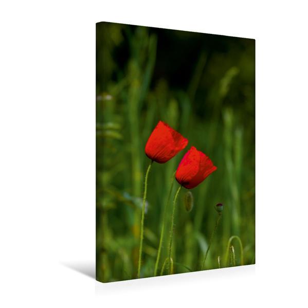 Premium Textil-Leinwand 30 cm x 45 cm hoch, Ein Motiv aus dem Kalender Zauber der Natur - Heimische Orchideen und Wiesenblumen | Wandbild, Bild auf Keilrahmen, Fertigbild auf echter Leinwand, Leinwanddruck - Coverbild
