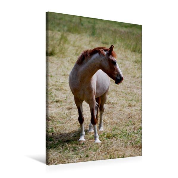 Premium Textil-Leinwand 60 cm x 90 cm hoch, waiting | Wandbild, Bild auf Keilrahmen, Fertigbild auf echter Leinwand, Leinwanddruck - Coverbild