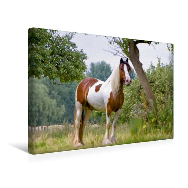 Premium Textil-Leinwand 45 cm x 30 cm quer, Ein Motiv aus dem Kalender Gypsy Horses | Wandbild, Bild auf Keilrahmen, Fertigbild auf echter Leinwand, Leinwanddruck - Coverbild