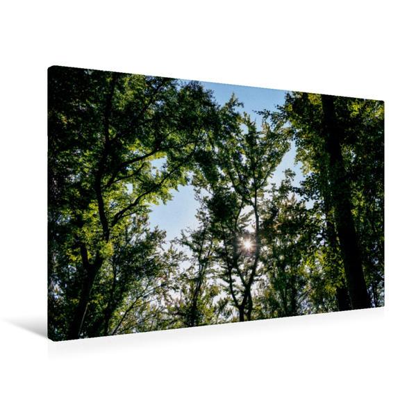 Premium Textil-Leinwand 90 cm x 60 cm quer, Ein Motiv aus dem Kalender Bäume (CH-Version)   Wandbild, Bild auf Keilrahmen, Fertigbild auf echter Leinwand, Leinwanddruck - Coverbild