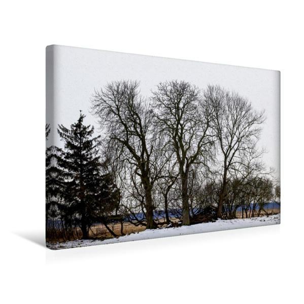 Premium Textil-Leinwand 45 cm x 30 cm quer, Ein Motiv aus dem Kalender Bäume (CH-Version) | Wandbild, Bild auf Keilrahmen, Fertigbild auf echter Leinwand, Leinwanddruck - Coverbild