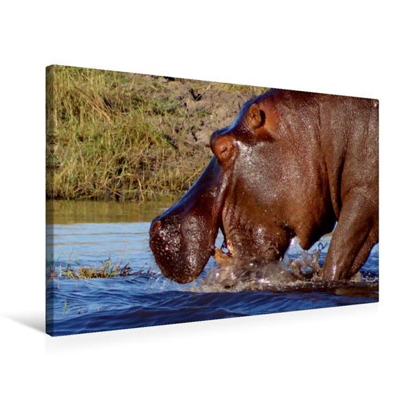 Premium Textil-Leinwand 75 cm x 50 cm quer, Flusspferd am Chobefluss - Botswana | Wandbild, Bild auf Keilrahmen, Fertigbild auf echter Leinwand, Leinwanddruck - Coverbild