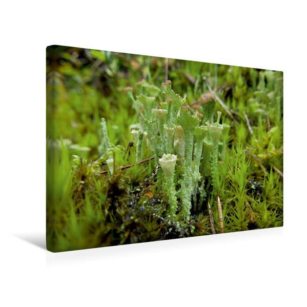 Premium Textil-Leinwand 45 cm x 30 cm quer, Ein Motiv aus dem Kalender Stille Welt Waldboden | Wandbild, Bild auf Keilrahmen, Fertigbild auf echter Leinwand, Leinwanddruck - Coverbild