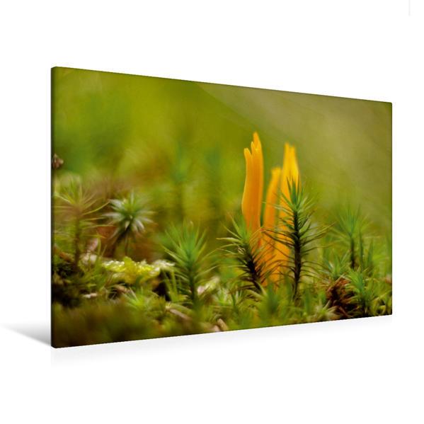 Premium Textil-Leinwand 120 cm x 80 cm quer, Ein Motiv aus dem Kalender Stille Welt Waldboden   Wandbild, Bild auf Keilrahmen, Fertigbild auf echter Leinwand, Leinwanddruck - Coverbild