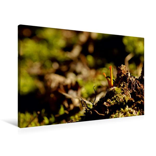 Premium Textil-Leinwand 90 cm x 60 cm quer, Ein Motiv aus dem Kalender Stille Welt Waldboden | Wandbild, Bild auf Keilrahmen, Fertigbild auf echter Leinwand, Leinwanddruck - Coverbild