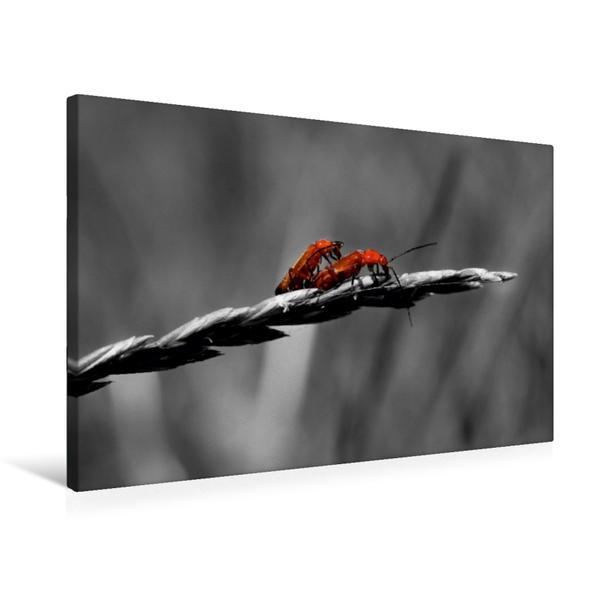 Premium Textil-Leinwand 75 cm x 50 cm quer, Zwei Käfer auf einer Weizenähre, Colorkey | Wandbild, Bild auf Keilrahmen, Fertigbild auf echter Leinwand, Leinwanddruck - Coverbild