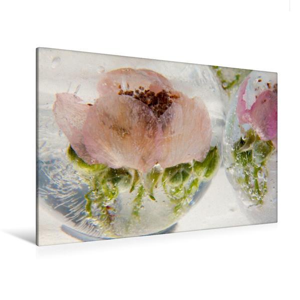 Premium Textil-Leinwand 120 cm x 80 cm quer, Blüten und Knospen einer wilden Rose in kristallklarem Eis | Wandbild, Bild auf Keilrahmen, Fertigbild auf echter Leinwand, Leinwanddruck - Coverbild