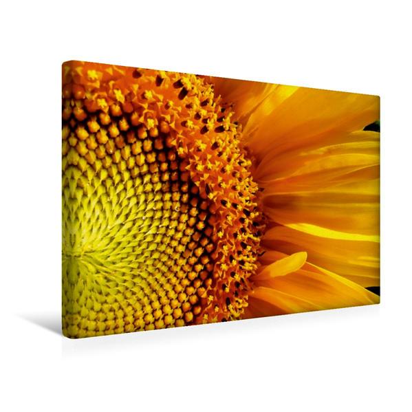 Premium Textil-Leinwand 45 cm x 30 cm quer, Sonnenblume | Wandbild, Bild auf Keilrahmen, Fertigbild auf echter Leinwand, Leinwanddruck - Coverbild