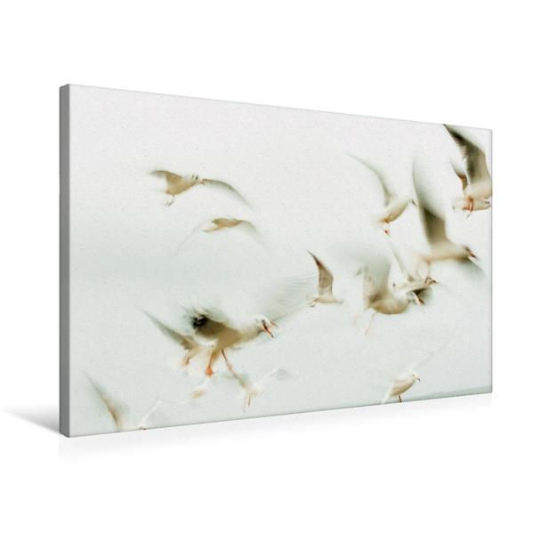 Premium Textil-Leinwand 75 cm x 50 cm quer, Ein Motiv aus dem Kalender Traum vom Fliegen - Poesie des Meeres   Wandbild, Bild auf Keilrahmen, Fertigbild auf echter Leinwand, Leinwanddruck - Coverbild