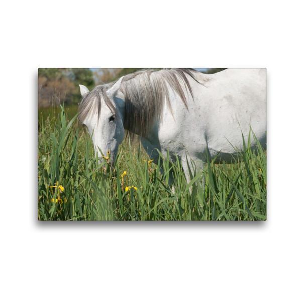 Premium Textil-Leinwand 45 cm x 30 cm quer, Camargue-Pferd als Landschaftspfleger   Wandbild, Bild auf Keilrahmen, Fertigbild auf echter Leinwand, Leinwanddruck - Coverbild