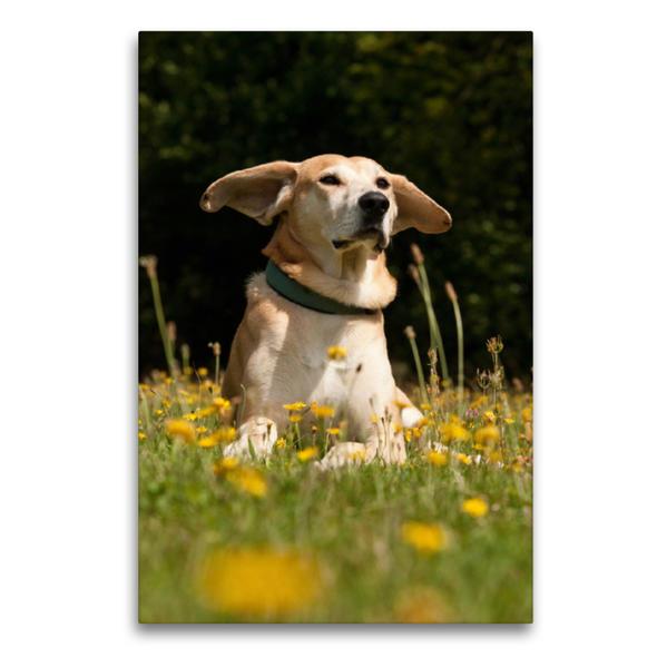 Premium Textil-Leinwand 60 cm x 90 cm hoch, Mit wehenden Ohren | Wandbild, Bild auf Keilrahmen, Fertigbild auf echter Leinwand, Leinwanddruck - Coverbild