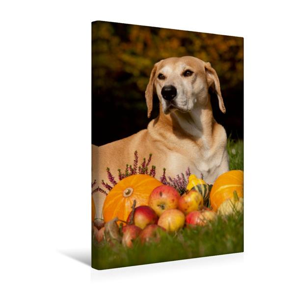 Premium Textil-Leinwand 30 cm x 45 cm hoch, Herbst Impressionen | Wandbild, Bild auf Keilrahmen, Fertigbild auf echter Leinwand, Leinwanddruck - Coverbild