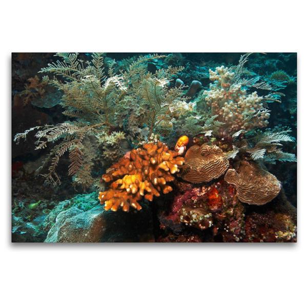 Premium Textil-Leinwand 120 cm x 80 cm quer, Korallen | Wandbild, Bild auf Keilrahmen, Fertigbild auf echter Leinwand, Leinwanddruck - Coverbild