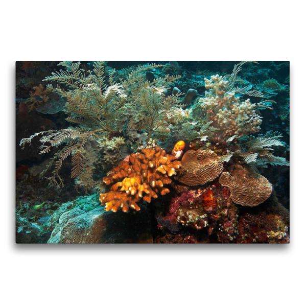 Premium Textil-Leinwand 75 cm x 50 cm quer, Korallen   Wandbild, Bild auf Keilrahmen, Fertigbild auf echter Leinwand, Leinwanddruck - Coverbild