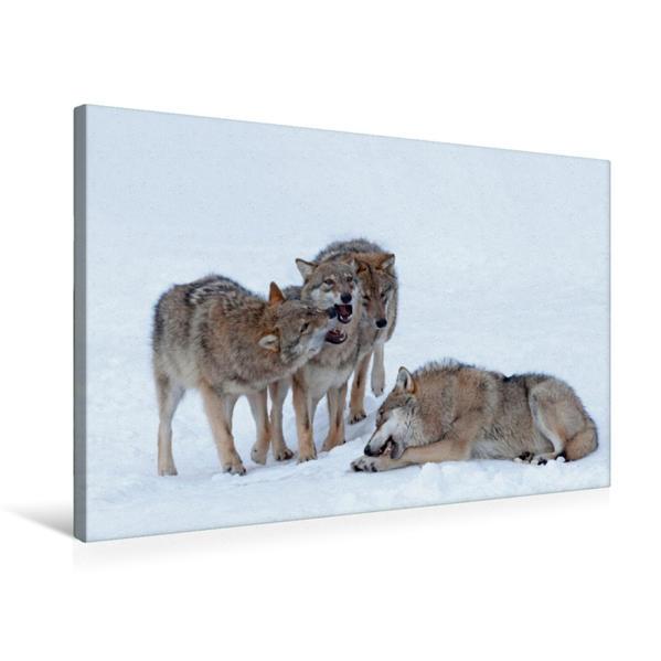 Premium Textil-Leinwand 75 cm x 50 cm quer, Wölfe | Wandbild, Bild auf Keilrahmen, Fertigbild auf echter Leinwand, Leinwanddruck - Coverbild