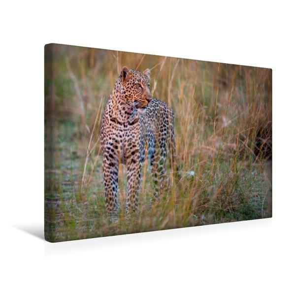 Premium Textil-Leinwand 45 cm x 30 cm quer, Leopard | Wandbild, Bild auf Keilrahmen, Fertigbild auf echter Leinwand, Leinwanddruck - Coverbild
