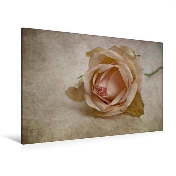 Premium Textil-Leinwand 120 cm x 80 cm quer, La vie en rose | Wandbild, Bild auf Keilrahmen, Fertigbild auf echter Leinwand, Leinwanddruck - Coverbild