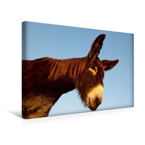 Premium Textil-Leinwand 45 cm x 30 cm quer, Ein Motiv aus dem Kalender Großesel an der Loreley | Wandbild, Bild auf Keilrahmen, Fertigbild auf echter Leinwand, Leinwanddruck - Coverbild