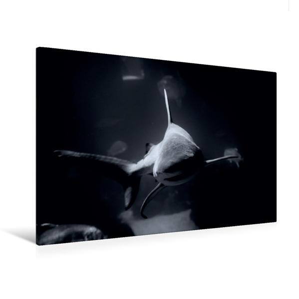 Premium Textil-Leinwand 120 cm x 80 cm quer, Hai | Wandbild, Bild auf Keilrahmen, Fertigbild auf echter Leinwand, Leinwanddruck - Coverbild