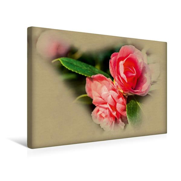 Premium Textil-Leinwand 45 cm x 30 cm quer, Ein Motiv aus dem Kalender Kamelien Blüten | Wandbild, Bild auf Keilrahmen, Fertigbild auf echter Leinwand, Leinwanddruck - Coverbild