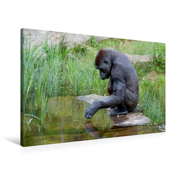 Premium Textil-Leinwand 90 cm x 60 cm quer, Gorilla | Wandbild, Bild auf Keilrahmen, Fertigbild auf echter Leinwand, Leinwanddruck - Coverbild