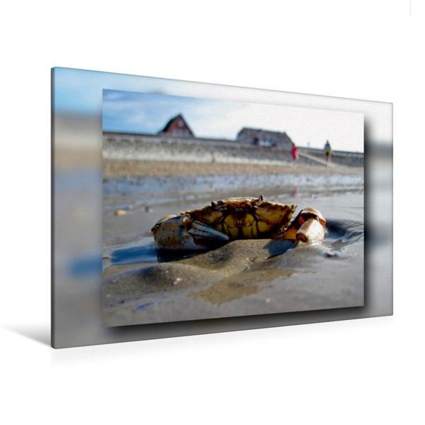 Premium Textil-Leinwand 120 cm x 80 cm quer, Strandkrabbe versperrt den Weg | Wandbild, Bild auf Keilrahmen, Fertigbild auf echter Leinwand, Leinwanddruck - Coverbild