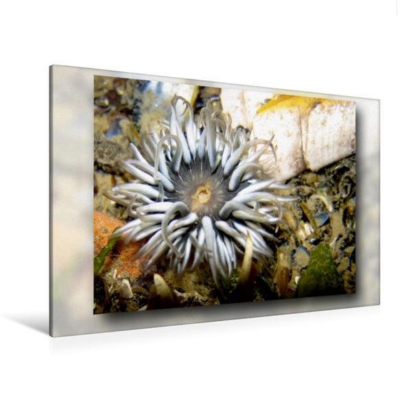 Premium Textil-Leinwand 120 cm x 80 cm quer, Mit deutlich erkennbarem Mund | Wandbild, Bild auf Keilrahmen, Fertigbild auf echter Leinwand, Leinwanddruck - Coverbild