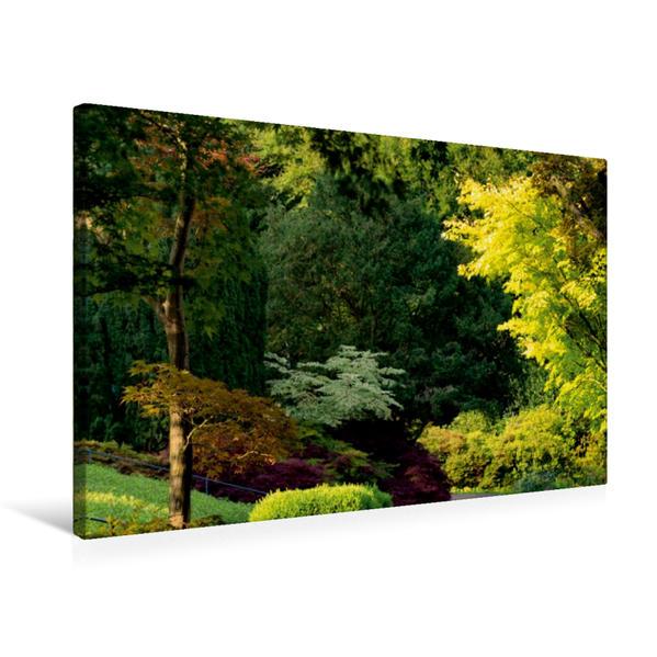 Premium Textil-Leinwand 75 cm x 50 cm quer, Gemischte Baumvegetation   Wandbild, Bild auf Keilrahmen, Fertigbild auf echter Leinwand, Leinwanddruck - Coverbild