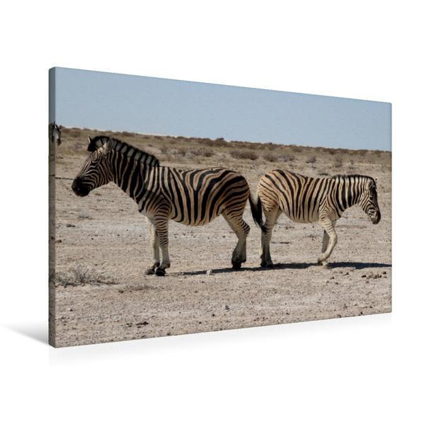Premium Textil-Leinwand 90 cm x 60 cm quer, Zebras | Wandbild, Bild auf Keilrahmen, Fertigbild auf echter Leinwand, Leinwanddruck - Coverbild