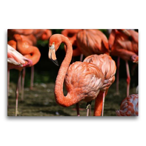 Premium Textil-Leinwand 75 cm x 50 cm quer, Flamingo Kolonie | Wandbild, Bild auf Keilrahmen, Fertigbild auf echter Leinwand, Leinwanddruck - Coverbild