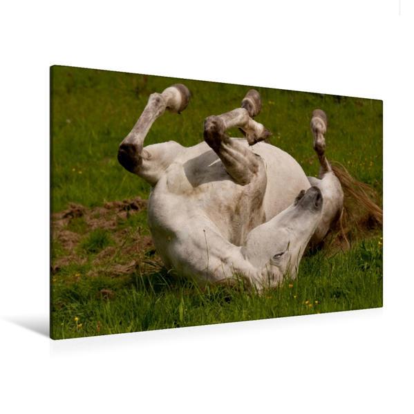 Premium Textil-Leinwand 120 cm x 80 cm quer, Wohlfühlen im Gras   Wandbild, Bild auf Keilrahmen, Fertigbild auf echter Leinwand, Leinwanddruck - Coverbild
