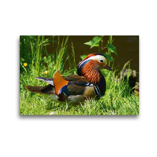 Premium Textil-Leinwand 45 cm x 30 cm quer, Mandarinenten Erpel | Wandbild, Bild auf Keilrahmen, Fertigbild auf echter Leinwand, Leinwanddruck - Coverbild