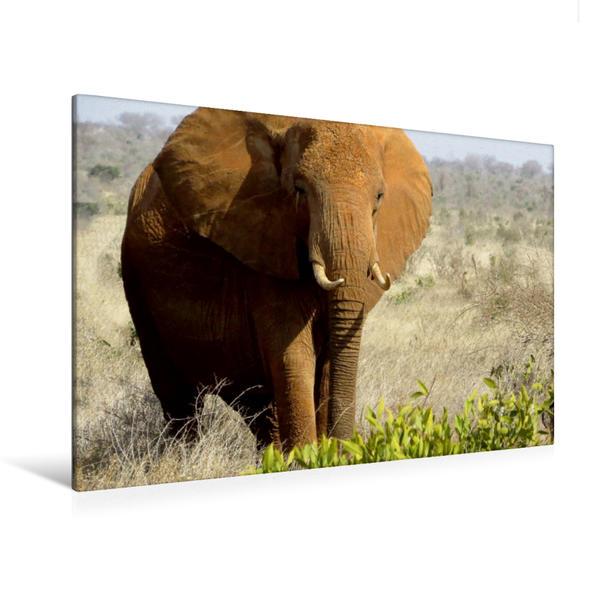 Premium Textil-Leinwand 120 cm x 80 cm quer, Ein Motiv aus dem Kalender Die rosa Elefanten vom Tsavo-Ost NP | Wandbild, Bild auf Keilrahmen, Fertigbild auf echter Leinwand, Leinwanddruck - Coverbild