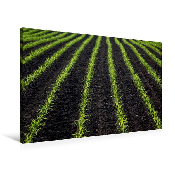 Premium Textil-Leinwand 90 cm x 60 cm quer, Frisches Grün auf dem Feld | Wandbild, Bild auf Keilrahmen, Fertigbild auf echter Leinwand, Leinwanddruck - Coverbild