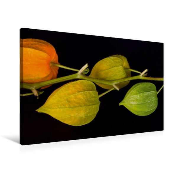 Premium Textil-Leinwand 75 cm x 50 cm quer, Ein Motiv aus dem Kalender Emotionale Momente: Physalis. / CH-Version | Wandbild, Bild auf Keilrahmen, Fertigbild auf echter Leinwand, Leinwanddruck - Coverbild