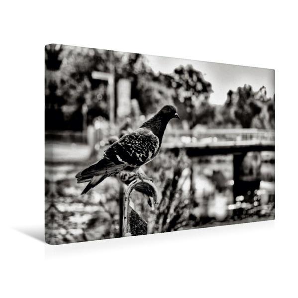 Premium Textil-Leinwand 45 cm x 30 cm quer, Ein Motiv aus dem Kalender Ein Blick auf Hann. Münden | Wandbild, Bild auf Keilrahmen, Fertigbild auf echter Leinwand, Leinwanddruck - Coverbild