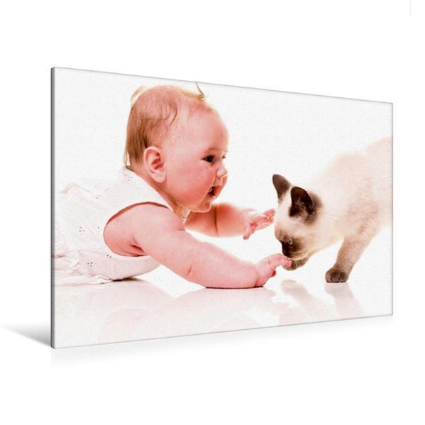 Premium Textil-Leinwand 120 cm x 80 cm quer, Ein Motiv aus dem Kalender Kätzchen und andere Babys   Wandbild, Bild auf Keilrahmen, Fertigbild auf echter Leinwand, Leinwanddruck - Coverbild