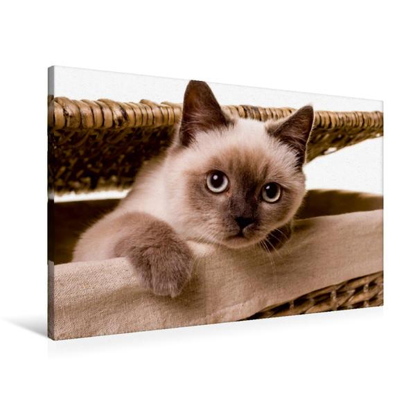 Premium Textil-Leinwand 90 cm x 60 cm quer, Ein Motiv aus dem Kalender Kätzchen und andere Babys | Wandbild, Bild auf Keilrahmen, Fertigbild auf echter Leinwand, Leinwanddruck - Coverbild