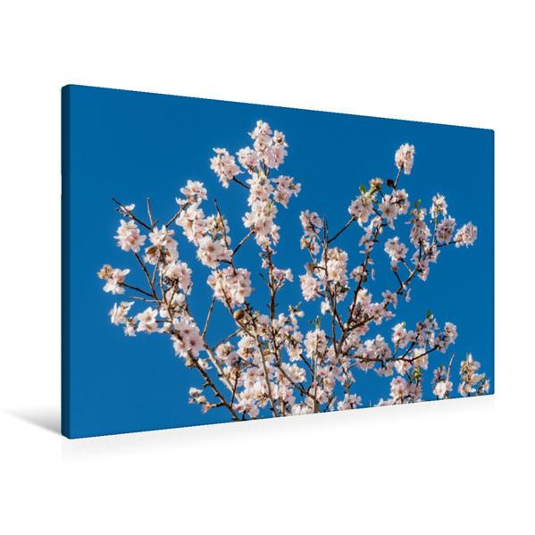 Premium Textil-Leinwand 90 cm x 60 cm quer, Ein Motiv aus dem Kalender Emotionale Momente: Mandeln | Wandbild, Bild auf Keilrahmen, Fertigbild auf echter Leinwand, Leinwanddruck - Coverbild