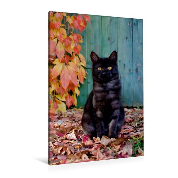 Premium Textil-Leinwand 80 cm x 120 cm  hoch, Niedliches Kätzchen mit rotem Weinlaub | Wandbild, Bild auf Keilrahmen, Fertigbild auf echter Leinwand, Leinwanddruck - Coverbild