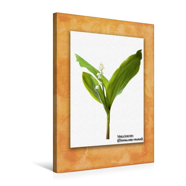 Premium Textil-Leinwand 50 cm x 75 cm hoch, Maiglöckchen (Convallaria majalis) | Wandbild, Bild auf Keilrahmen, Fertigbild auf echter Leinwand, Leinwanddruck - Coverbild