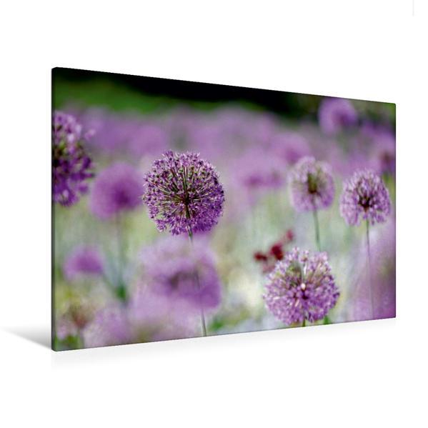 Premium Textil-Leinwand 120 cm x 80 cm quer, Allium | Wandbild, Bild auf Keilrahmen, Fertigbild auf echter Leinwand, Leinwanddruck - Coverbild