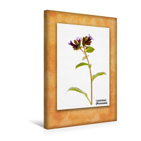 Premium Textil-Leinwand 30 cm x 45 cm hoch, Lungenkraut (Pulmonaria) | Wandbild, Bild auf Keilrahmen, Fertigbild auf echter Leinwand, Leinwanddruck - Coverbild